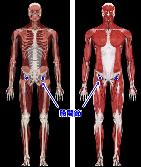 股関節の位置